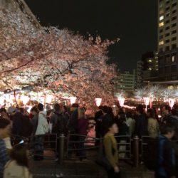 2018年の目黒川の桜