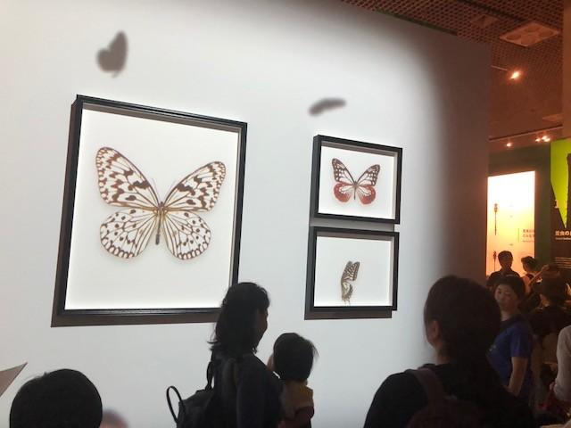 昆虫展に入ってすぐには、今話題のプロジェクトマッピングによる蝶がお出迎え。