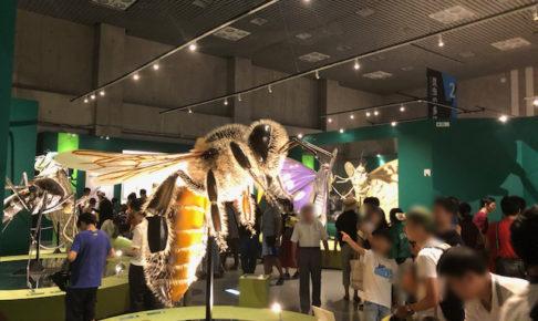 巨大なハチの模型を通じて、昆虫の外見的特徴を知ることができる。